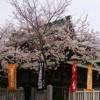 桜の季節の繁昌亭、さくら心で夜の道草!